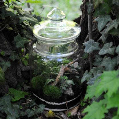 zestaw DIY ogród leśny, las w słoiku, fittonia, hedera, athyrium