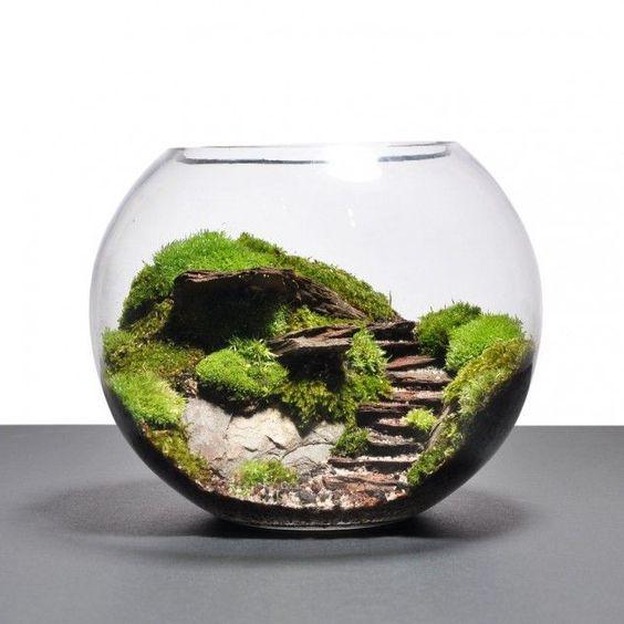 Terrarium w szklanej kuli