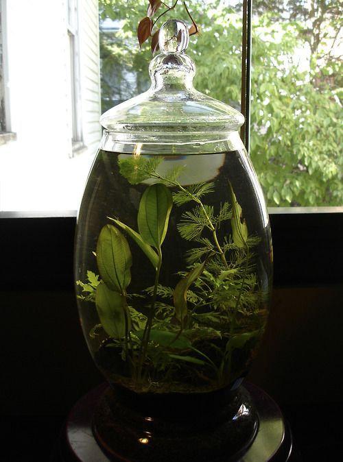 Ogród w szkle z roślinami wodnymi