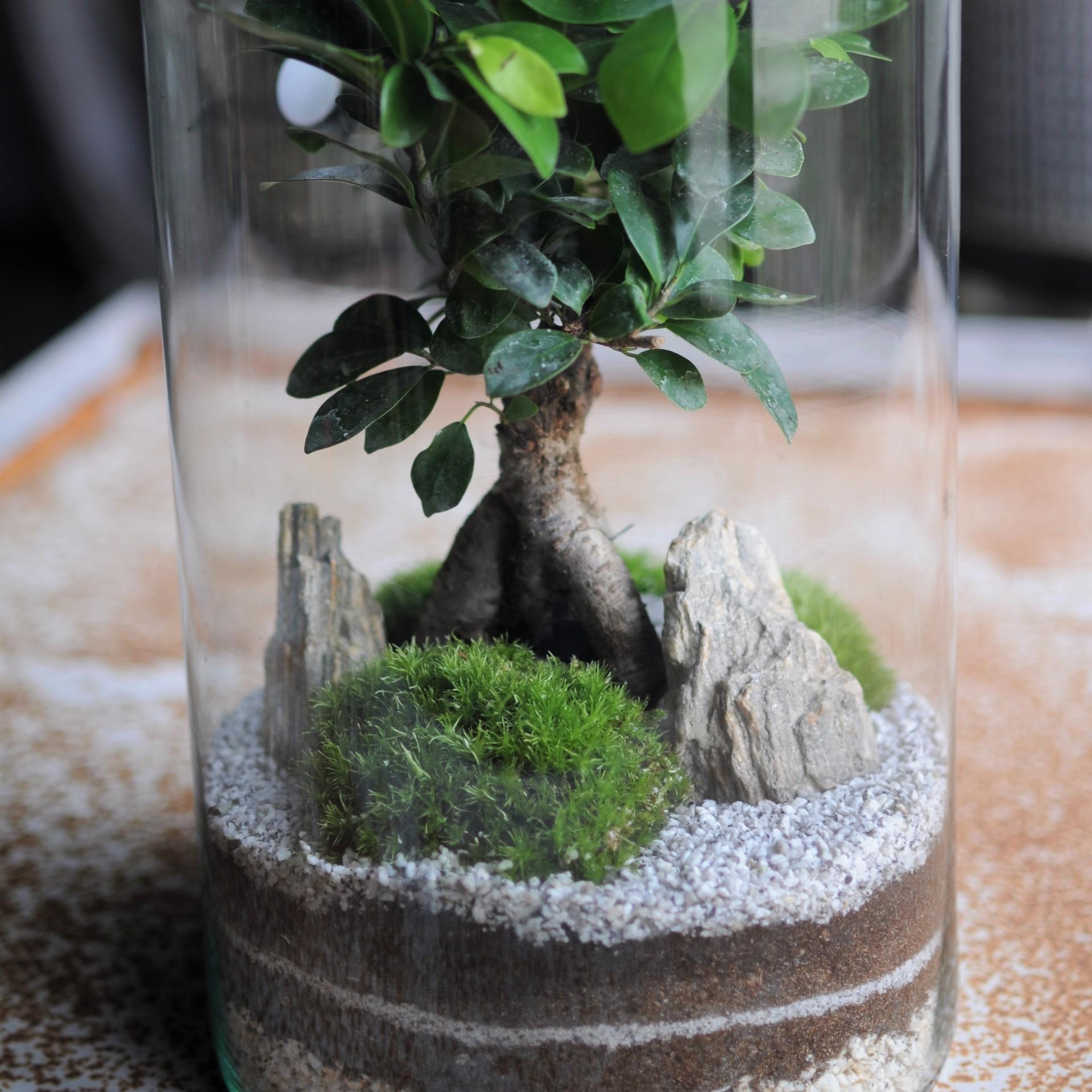 Zestaw Ogrod Japonski Z Drzewkiem Bonsai Las W Sloiku Sklep Rosliny Produkty Zestawy Akcesoria Porady