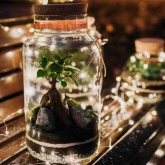 las w butli z korkiem o wysokości 35cm