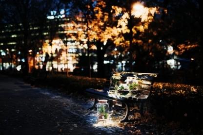 świąteczny las w słoiku na ławce w parku wieczorową porą