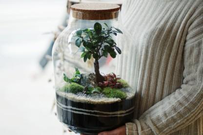 warsztaty online las w słoiku bonsai