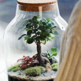 warsztaty las w słoiku bonsai online