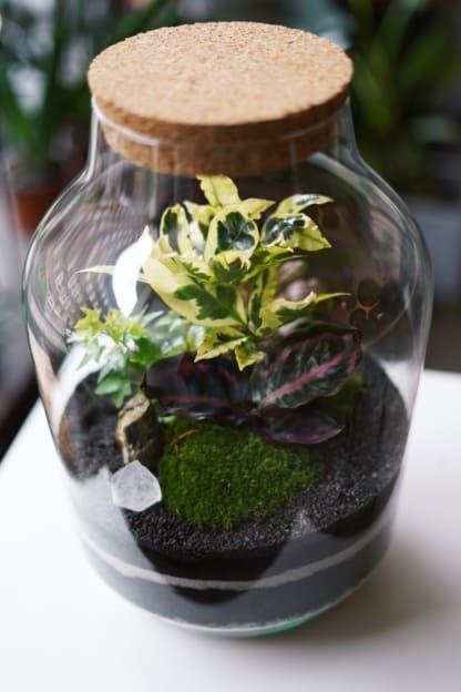 zestaw zrób to sam tropikalny ogród w szkle