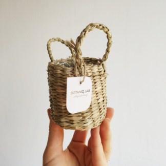 koszyk 6 cm dla baby plant