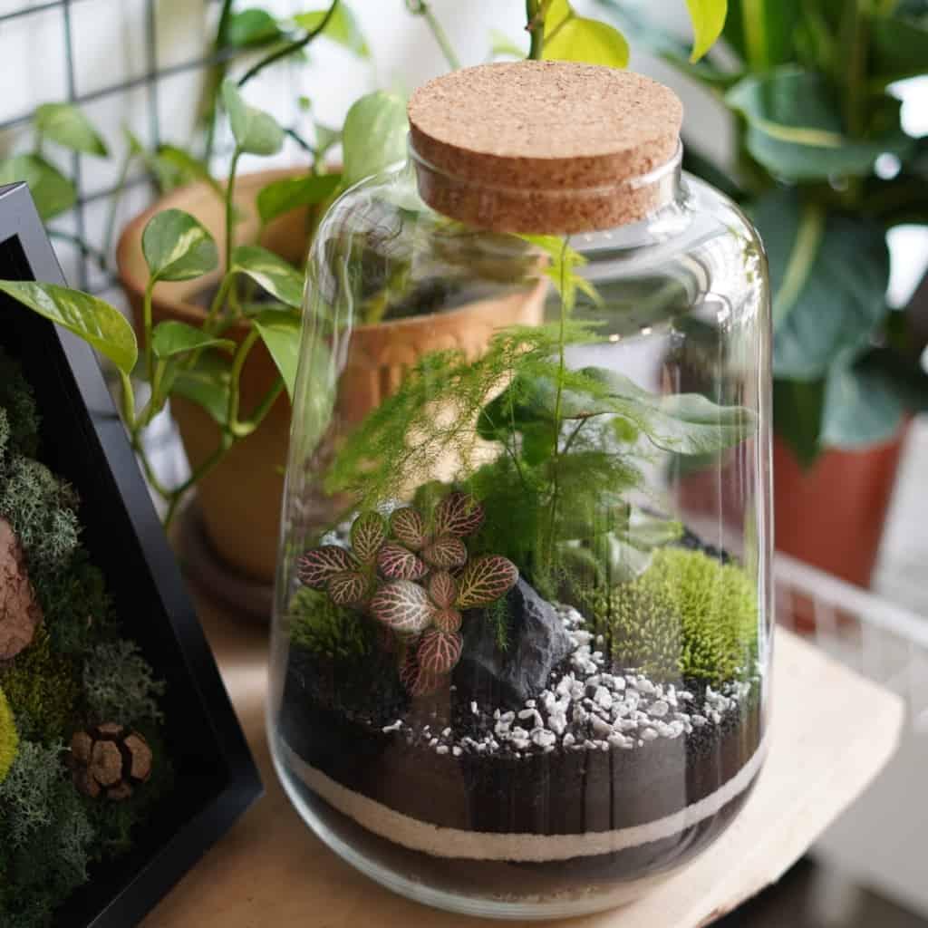 zestaw diy paprociowy las w słoiku