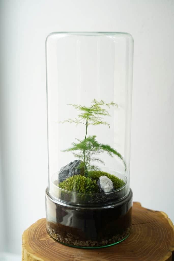 Szklany klosz cylinder wys. 33 cm