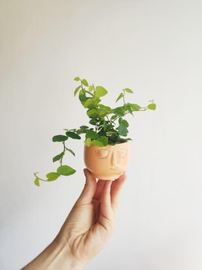 Osłonka buźka brzoskwiniowa - 6 cm