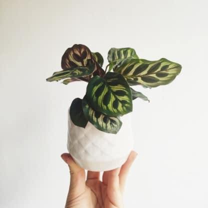osłonka ceramiczna biała Bohema 6 cm zielony słoik