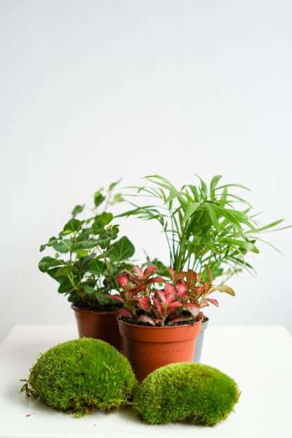 Zestaw roślin do lasu w szkle - NA DOBRY POCZĄTEK